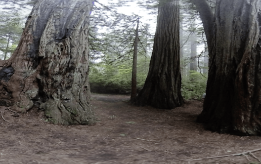 Sequoia National Park VR 360 Stereoscopic