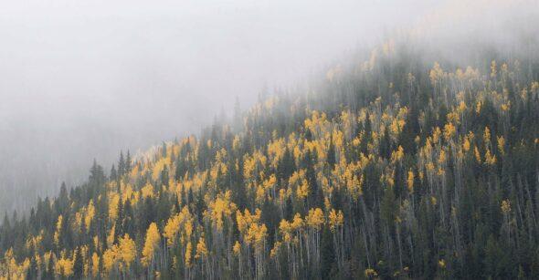 Foggy Autumn Fall Foliage